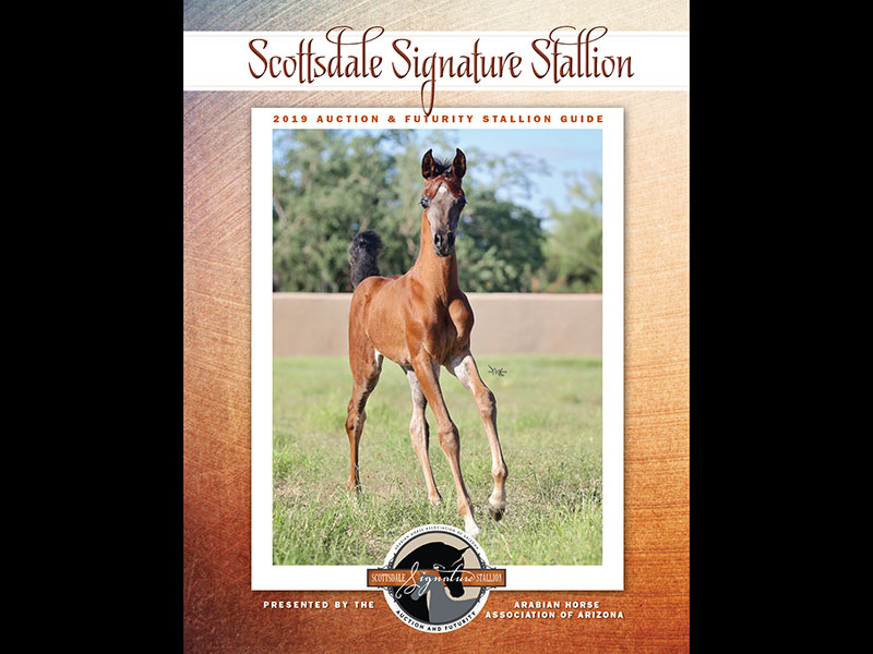 Scottsdale Signature Stallion 2019 Auction & Futurity Stallion Guide