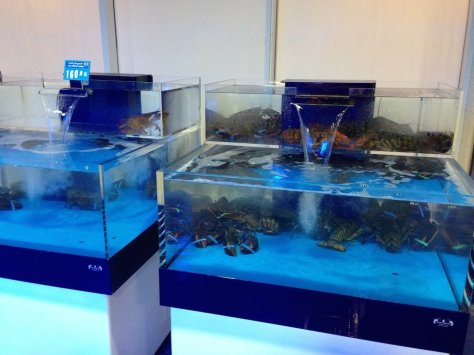 Live seafood section