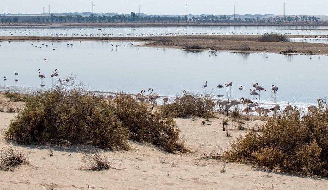 Wildlife in Abu Dhabi: Al Wathba Wetland Reserve
