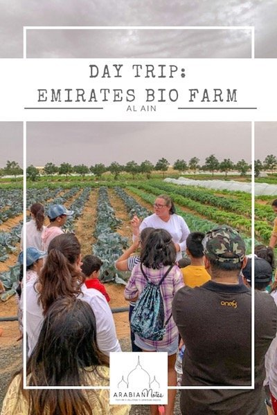 Day trip: Emirates Bio Farm - Tractor rides, goat feeding, vegetable picking and more makes for a fun and memorable family day out in the UAE.