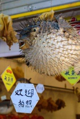 Hong Kong July 2017 Arabian Notes 105