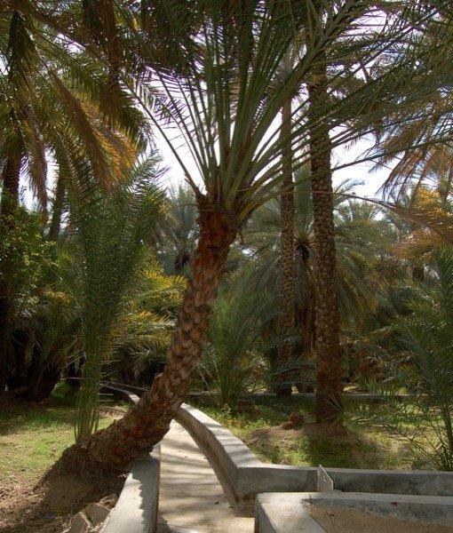 Things to do in Al Ain Arabian Notes January 2016 3