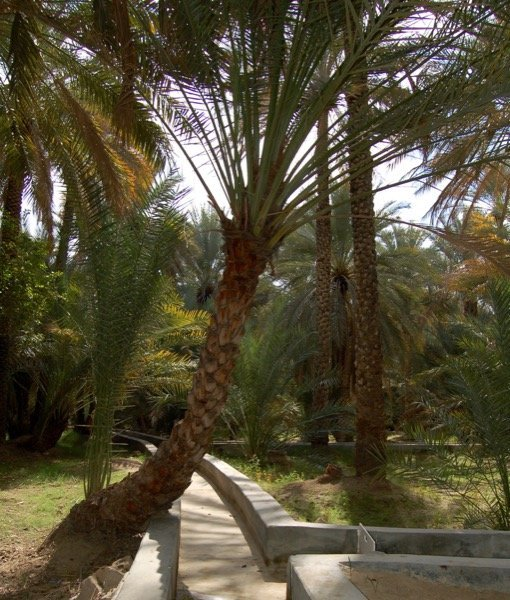 Things to do in Al Ain Arabian Notes January 2016 3