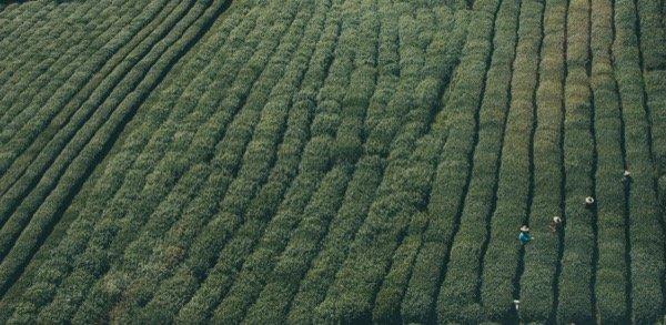 green field 24tsxm7qgqe-mcdobbie-hu