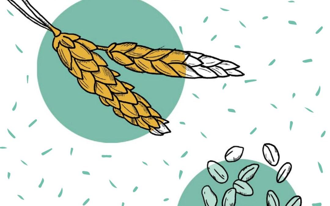 الحبوب   الزراعة العضوية المستدامة