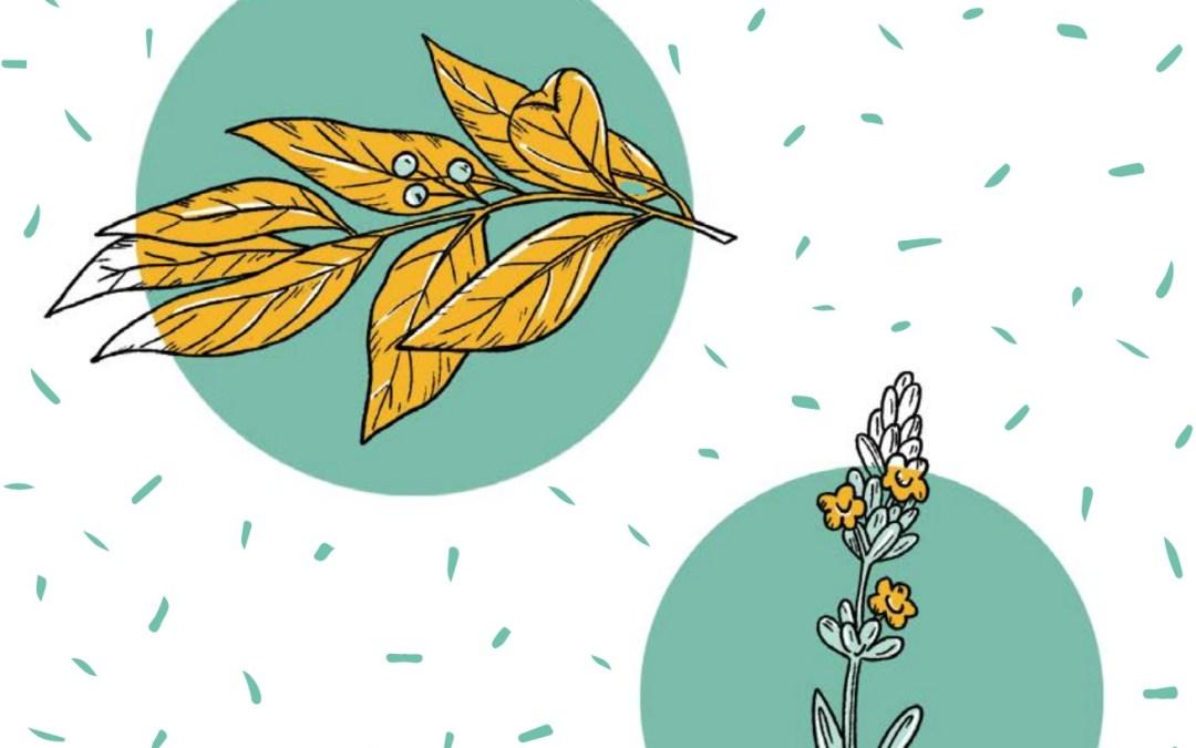 النباتات الطبية والعطرية