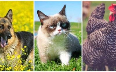 حيوانات أليفة تمتلك ثروات خيالية… إليكم الأرقام