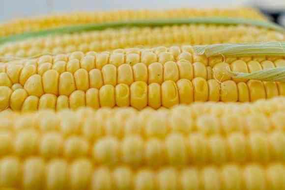 الاستثمار على الذرة