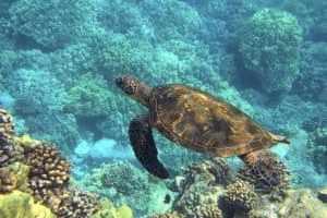 Rotes Meer: Tauchurlaub