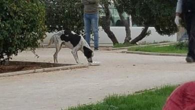 Photo of فيديوهات مروعة لكلاب تلفظ أنفاسها.. وغضب في لبنان