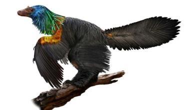 Photo of اكتشاف ديناصور بريش ملون مثل الطائر الطنان