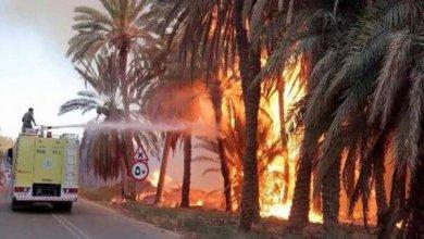 Photo of حريق هائل يلتهم النخيل والأشجار بضباء