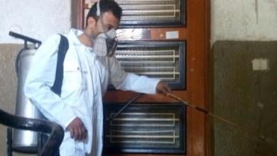 Photo of مصر.. حقيقة حشرة غريبة انتشرت بالمعادي وأثارت الفزع