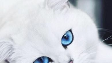 Photo of قطة على «إنستغرام» تجذب مليون متابع