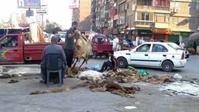 Photo of تجارة الجلود تنتعش في مصر خلال عيد الأضحى