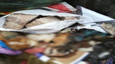 Photo of العثور على حيوانات بها طلاسم سحرية في الدار البيضاء