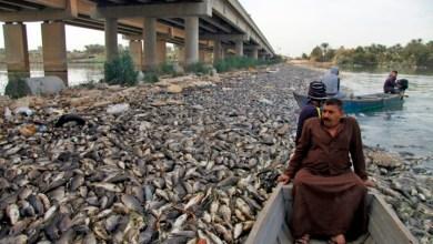 Photo of العراق يكشف أسباب نفوق ملايين الأسماك بشكل مفاجئ