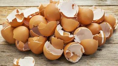 Photo of إذا كنت من مدمني تناول البيض.. فإليك هذا الخبر!