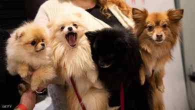"""Photo of علماء يحذرون من """"إنفلونزا الكلاب"""" المميتة"""