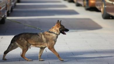 Photo of كلب ينقذ امرأة من جريمة اغتصاب