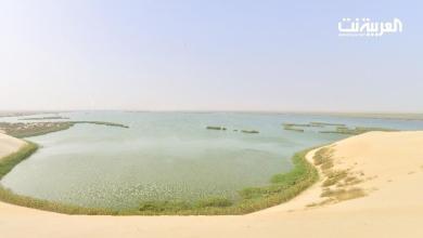 Photo of البحيرة الأكبر في الخليج تتحول إلى محمية في الأحساء