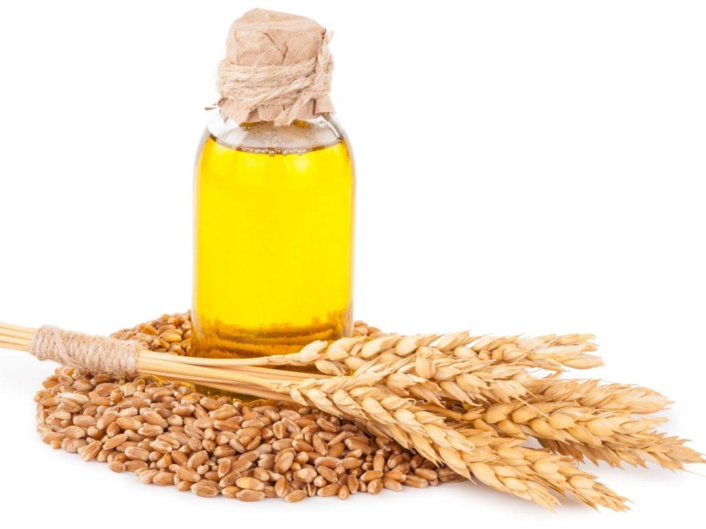 فوائد زيت جنين القمح لن تصدق ان كل هذه الفوائد موجوده في جنين القمح