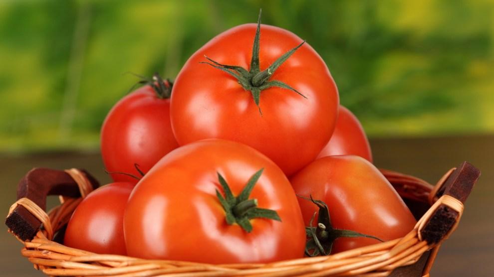 dagga pomodori