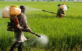 Photo of دراسة: المبيدات الحشرية قد تؤثر على الخصوبة لدى النساء