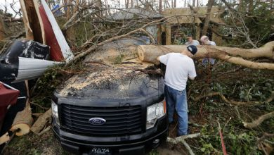 """Photo of فرق إنقاذ ترافقها كلاب مدربة تبحث عن الناجين من الإعصار """"مايكل"""""""