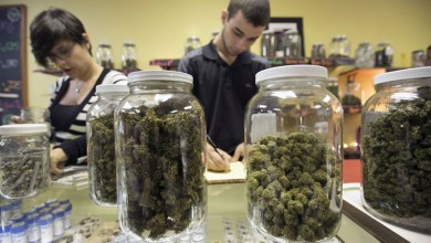 Photo of تشريع الماريجوانا في ميشيغان.. أضرار كثيرة وفوائد أقل