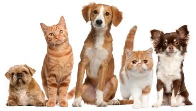 Photo of تشريع لرعاية الحيوانات المنزلية عند انفصال الزوجين في ولاية كاليفورنيا الأميركية