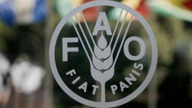 Photo of منظمة الفاو: استقرار أسعار الغذاء العالمية في ديسمبر 2018