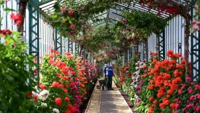 Photo of حدائق لايكن الزجاجية تفتح أبوابها للزوار