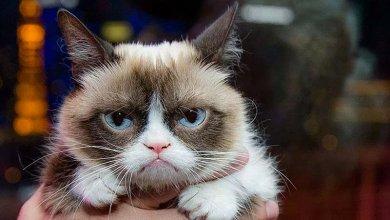 Photo of وفاة أشهر قطة في العالم