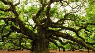 Photo of دراسة: الأشجار تمد بعضها بالغذاء