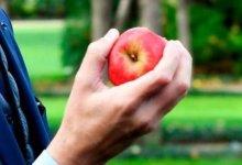 Photo of علماء يعثرون على بكتيريا خطيرة داخل التفاح