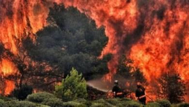 Photo of غابات الأمازون شهدت 72 ألف حريق خلال العام الجاري