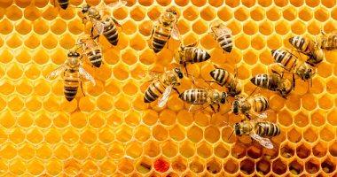 Photo of نفوق أكثر من نصف مليار نحلة في البرازيل خلال 3 أشهر