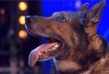 Photo of كلب يلعق سيدة أمريكية فيتسبب في بتر أطرافها الأربعة!