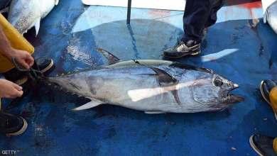 Photo of اصطادوا سمكة تونة قيمتها 3 مليون دولار وأعادوها للمياه