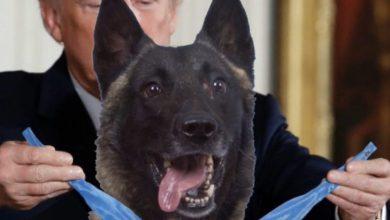 Photo of ترامب يمنح الكلب المشارك في تصفية البغدادي قلادة تكريم