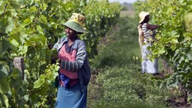 Photo of بلدان إفريقيا تخوض معركة سد الفجوة الغذائية
