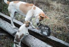 Photo of جائزة لامرأة أوقفت قتل الحيوانات في تكساس