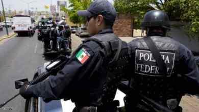 Photo of الشرطة المكسيكية تعتقل حمار مشاغب وتودعه في السجن