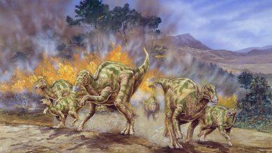 Photo of اكتشاف نوع من السرطان يصيب البشر في حفريات ديناصور