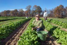 Photo of ترامب يعلن 24 مارس يومًا وطنيًا للمزارعين الأمريكيين