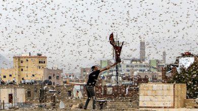 Photo of الحشرات والزواحف تهاجم عدة دول.. وأزمة جوع تهدد العالم