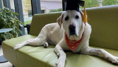 """Photo of كلية """"فرجينيا ماريلاند"""" تمنح الدكتوراه الفخرية لـ""""كلب""""!"""