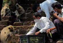 Photo of قرود تسرق عينات دم لمصابي كورونا وتهدد بنشرها في ولاية هندية