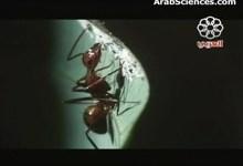 مملكة النمل